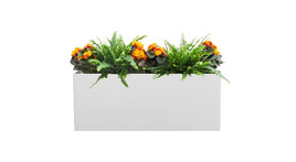 Filling of planter boxes - Begonias and ferns