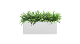 Filling of planter boxes - Ferns