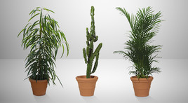 Palms / Broad-leaved / Woody Plants, Shrubs / Cacti