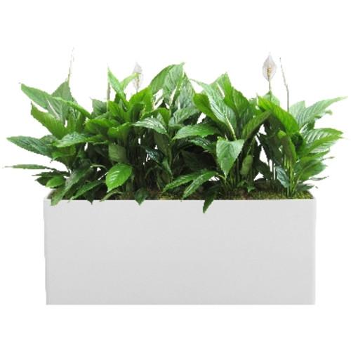 Kastenfüllungen für Pflanzkästen - Einblatt und Moosabdeckung