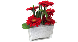 Floristik – Glasquader mit Gerbera rot