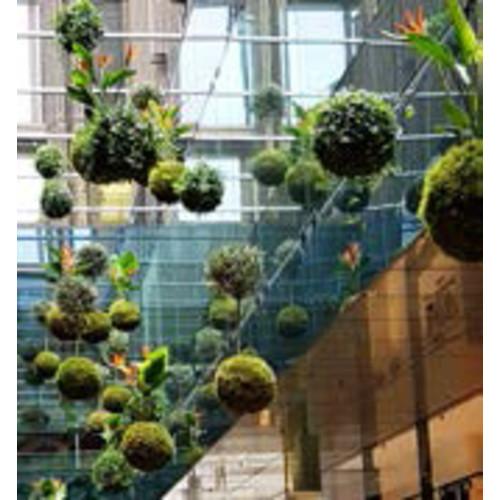 Kokedama: Schwebende Pflanze im Moosball