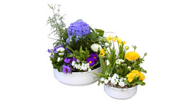 Potted plant arrangement