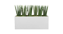 Filling of planter boxes - Sansevieria cylindrica and moss covering