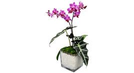 Floristik – großer Glasquader mit Orchidee, z.B. lila
