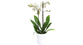 Floristik – Keramik weiß mit Orchidee weiß