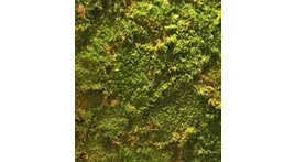 Evergreen moss wall made of real moss