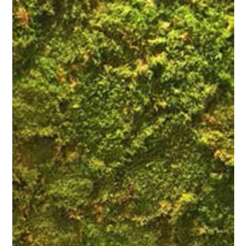Immergrüne Mooswand aus echtem Moos
