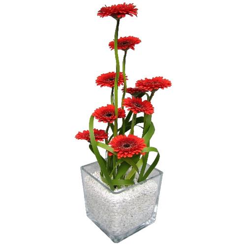 Floristik – großer Glasquader mit Gerbera, z.B. rot