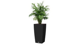 Floor container 40 x 40 cm / H 75 cm – with mountain palm